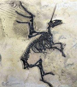 Fossile d'unicorno