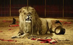 Lion Tamer 2