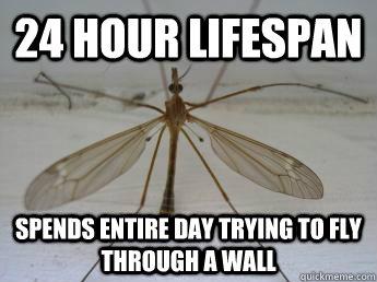 lifespan 3