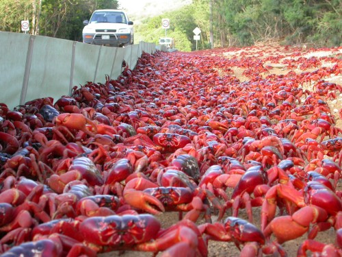 crabzilla invasione