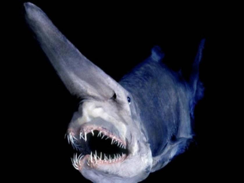 Pesce Goblin.